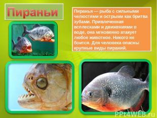 Пиранья — рыба с сильными челюстями и острыми как бритва зубами. Привлеченная вс