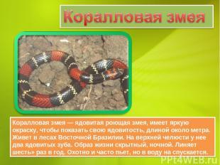 Коралловая змея — ядовитая роющая змея, имеет яркую окраску, чтобы показать свою