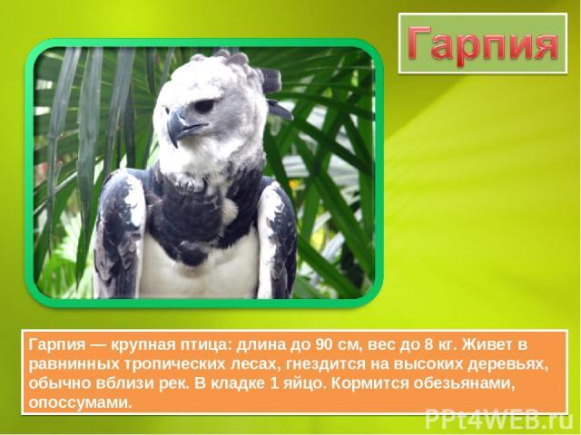 Гарпия — крупная птица: длина до 90 см, вес до 8 кг. Живет в равнинных тропических лесах, гнездится на высоких деревьях, обычно вблизи рек. В кладке 1 яйцо. Кормится обезьянами, опоссумами.