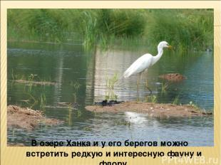 В озере Ханка и у его берегов можно встретить редкую и интересную фауну и флору.