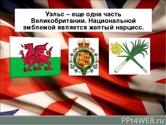 Уэльс – еще одна часть Великобритании. Национальной эмблемой является желтый нарцисс.