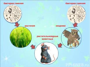 бактерии гниения бактерии гниения растения растительноядные животные хищники