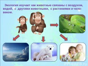 Экология изучает как животные связаны с воздухом, водой, с другими животными, с