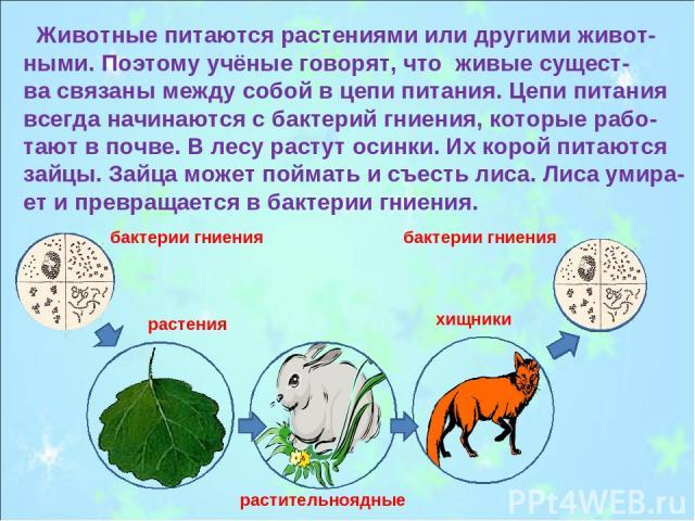 Животные питаются растениями или другими живот- ными. Поэтому учёные говорят, что живые сущест- ва связаны между собой в цепи питания. Цепи питания всегда начинаются с бактерий гниения, которые рабо- тают в почве. В лесу растут осинки. Их корой пита…
