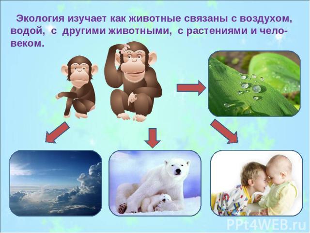 Экология изучает как животные связаны с воздухом, водой, с другими животными, с растениями и чело-веком.
