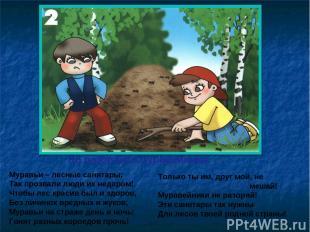 Не разоряйте муравейники Муравьи – лесные санитары; Так прозвали люди их недаром