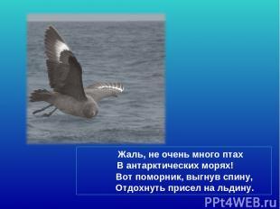 Жаль, не очень много птах В антарктических морях! Вот поморник, выгнув спину, От