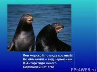 Лев морской по виду грозный! Но обманчив – вид серьёзный: В Антарктиде никого Бо