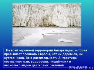 На всей огромной территории Антарктиды, которая превышает площадь Европы, нет ни