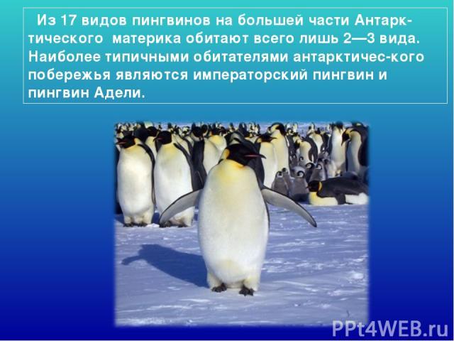 Из 17 видов пингвинов на большей части Антарк-тического материка обитают всего лишь 2—3 вида. Наиболее типичными обитателями антарктичес-кого побережья являются императорский пингвин и пингвин Адели.