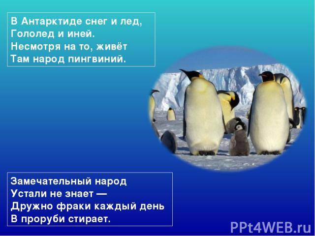 ВАнтарктиде снег илед, Гололед ииней. Несмотря нато, живёт Там народ пингвиний. Замечательный народ Устали незнает— Дружно фраки каждый день Впроруби стирает.