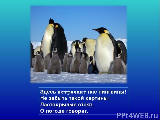 Здесь встречают нас пингвины! Не забыть такой картины! Ластокрылые стоят, О погоде говорят.