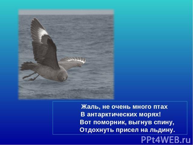 Жаль, не очень много птах В антарктических морях! Вот поморник, выгнув спину, Отдохнуть присел на льдину.