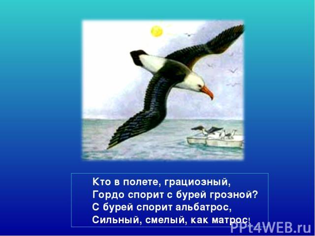 Кто в полете, грациозный, Гордо спорит с бурей грозной? С бурей спорит альбатрос, Сильный, смелый, как матрос!