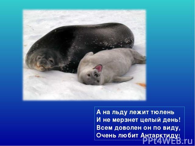 А на льду лежит тюлень И не мерзнет целый день! Всем доволен он по виду, Очень любит Антарктиду!