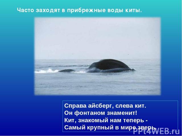 Справа айсберг, слева кит. Он фонтаном знаменит! Кит, знакомый нам теперь - Самый крупный в мире зверь. Часто заходят в прибрежные воды киты.