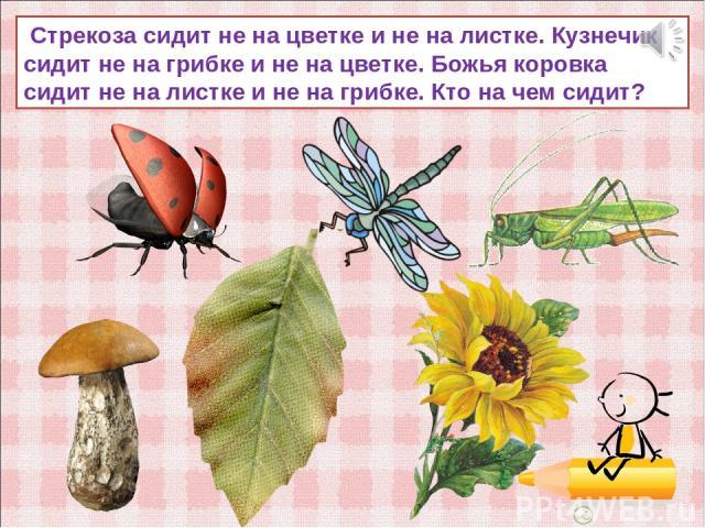 Стрекоза сидит не на цветке и не на листке. Кузнечик сидит не на грибке и не на цветке. Божья коровка сидит не на листке и не на грибке. Кто на чем сидит?