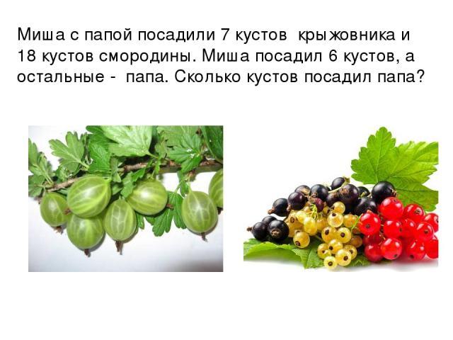 Миша с папой посадили 7 кустов крыжовника и 18 кустов смородины. Миша посадил 6 кустов, а остальные - папа. Сколько кустов посадил папа?