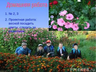 № 2, 3 Проектная работа: весной посадить цветы, следить за развитием.