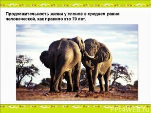 Продолжительность жизни у слонов в среднем равна человеческой, как правило это 7