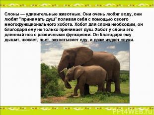 """Слоны — удивительные животные. Они очень любят воду, они любят """"принимать душ"""" п"""