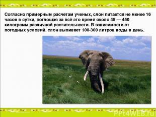 Согласно примерным расчетам ученых, слон питается не менее 16 часов в сутки, пог