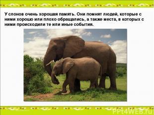 У слонов очень хорошая память. Они помнят людей, которые с ними хорошо или плохо