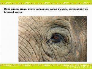 Спят слоны мало, всего несколько часов в сутки, как правило не более 4 часов.