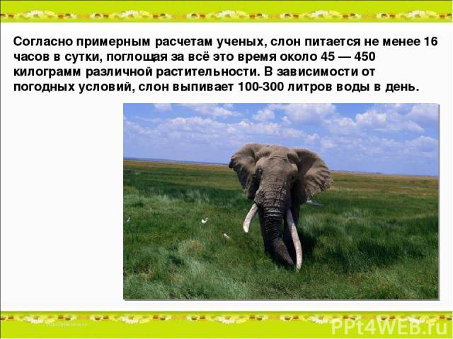 Согласно примерным расчетам ученых, слон питается не менее 16 часов в сутки, поглощая за всё это время около 45 — 450 килограмм различной растительности. В зависимости от погодных условий, слон выпивает 100-300 литров воды в день.