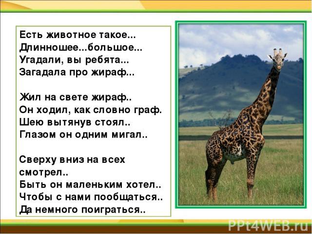Есть животное такое... Длинношее...большое... Угадали, вы ребята... Загадала про жираф... Жил на свете жираф.. Он ходил, как словно граф. Шею вытянув стоял.. Глазом он одним мигал.. Сверху вниз на всех смотрел.. Быть он маленьким хотел.. Чтобы с нам…