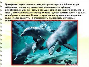 Дельфины - единственные киты, которые водятся в Чёрном море: небольшие по размер