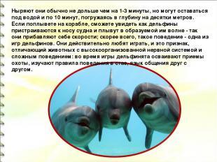 Ныряют они обычно не дольше чем на 1-3 минуты, но могут оставаться под водой и п