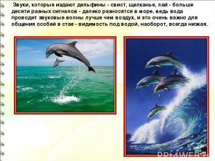 Звуки, которые издают дельфины - свист, щелканье, лай - больше десяти разных си