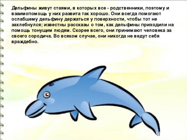 Дельфины живут стаями, в которых все - родственники, поэтому и взаимопомощь у них развита так хорошо. Они всегда помогают ослабшему дельфину держаться у поверхности, чтобы тот не захлебнулся; известны рассказы о том, как дельфины приходили на помощь…