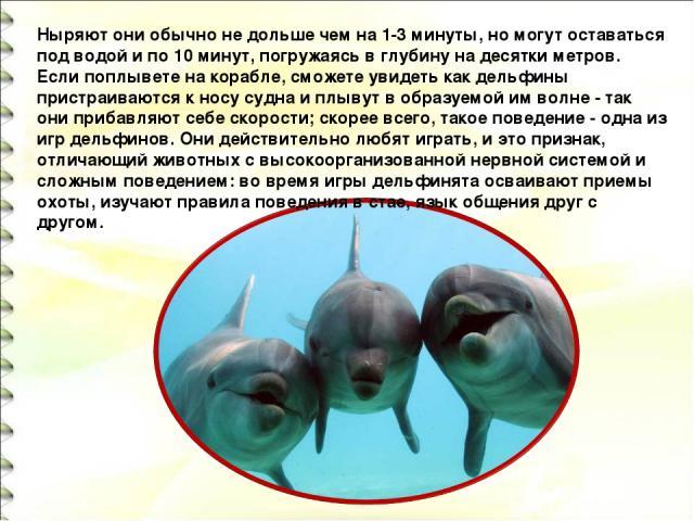 Ныряют они обычно не дольше чем на 1-3 минуты, но могут оставаться под водой и по 10 минут, погружаясь в глубину на десятки метров. Если поплывете на корабле, сможете увидеть как дельфины пристраиваются к носу судна и плывут в образуемой им волне - …