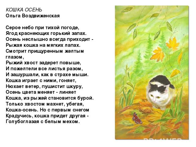КОШКА ОСЕНЬ Ольга Воздвиженская Серое небо при тихой погоде, Ягод краснеющих горький запах. Осень неслышно всегда приходит - Рыжая кошка на мягких лапах. Смотрит прищуренным желтым глазом, Рыжий хвост задерет повыше, И пожелтели все листья разом, И …