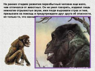 На ранних стадиях развития первобытный человек еще мало, чем отличался от животн