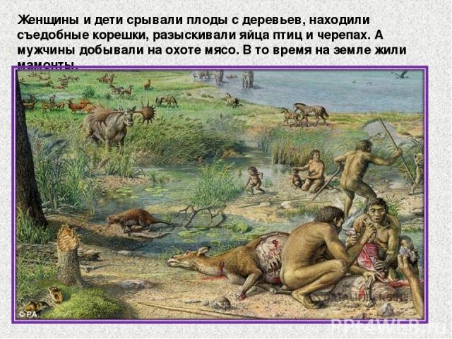 Женщины и дети срывали плоды с деревьев, находили съедобные корешки, разыскивали яйца птиц и черепах. А мужчины добывали на охоте мясо. В то время на земле жили мамонты.