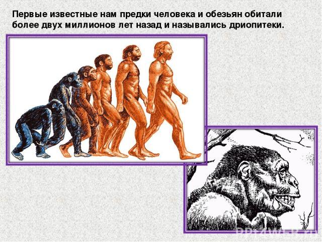 Первые известные нам предки человека и обезьян обитали более двух миллионов лет назад и назывались дриопитеки.