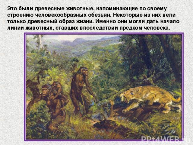 Это были древесные животные, напоминающие по своему строению человекообразных обезьян. Некоторые из них вели только древесный образ жизни. Именно они могли дать начало линии животных, ставших впоследствии предком человека.