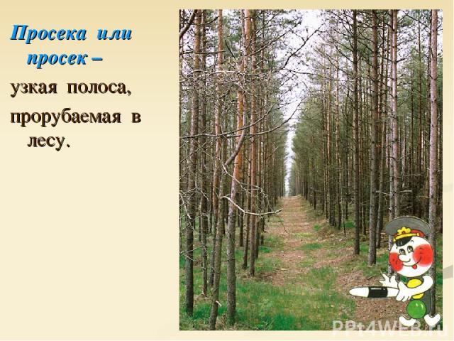Просека или просек – узкая полоса, прорубаемая в лесу.