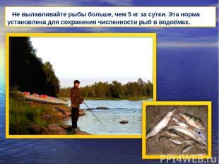 Не вылавливайте рыбы больше, чем 5 кг за сутки. Эта норма установлена для сохран