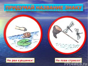 Не рви кувшинки! Не лови стрекоз!