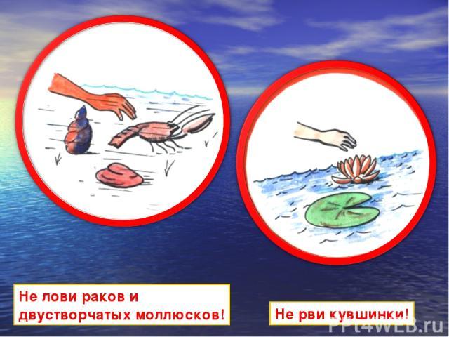 Не лови раков и двустворчатых моллюсков! Не рви кувшинки!
