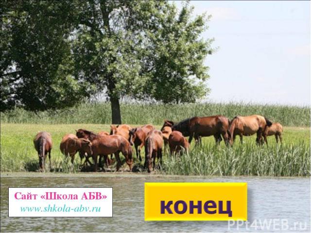 Сайт «Школа АБВ» www.shkola-abv.ru