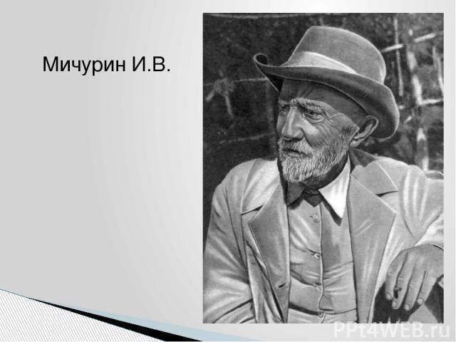 Мичурин И.В.