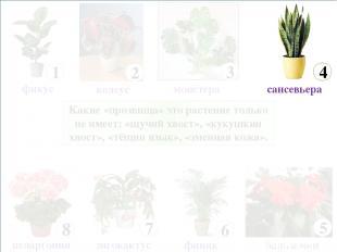 Какие «прозвища» это растение только не имеет: «щучий хвост», «кукушкин хвост»,
