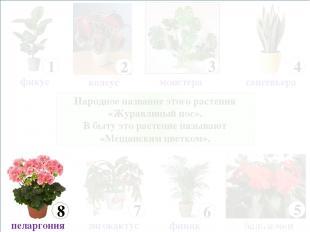 Народное название этого растения «Журавлиный нос». В быту это растение называют