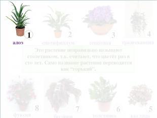 Это растение неправильно называют столетником, т.к. считают, что цветёт раз в ст
