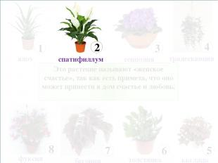 Это растение называют «женское счастье», так как есть примета, что оно может при